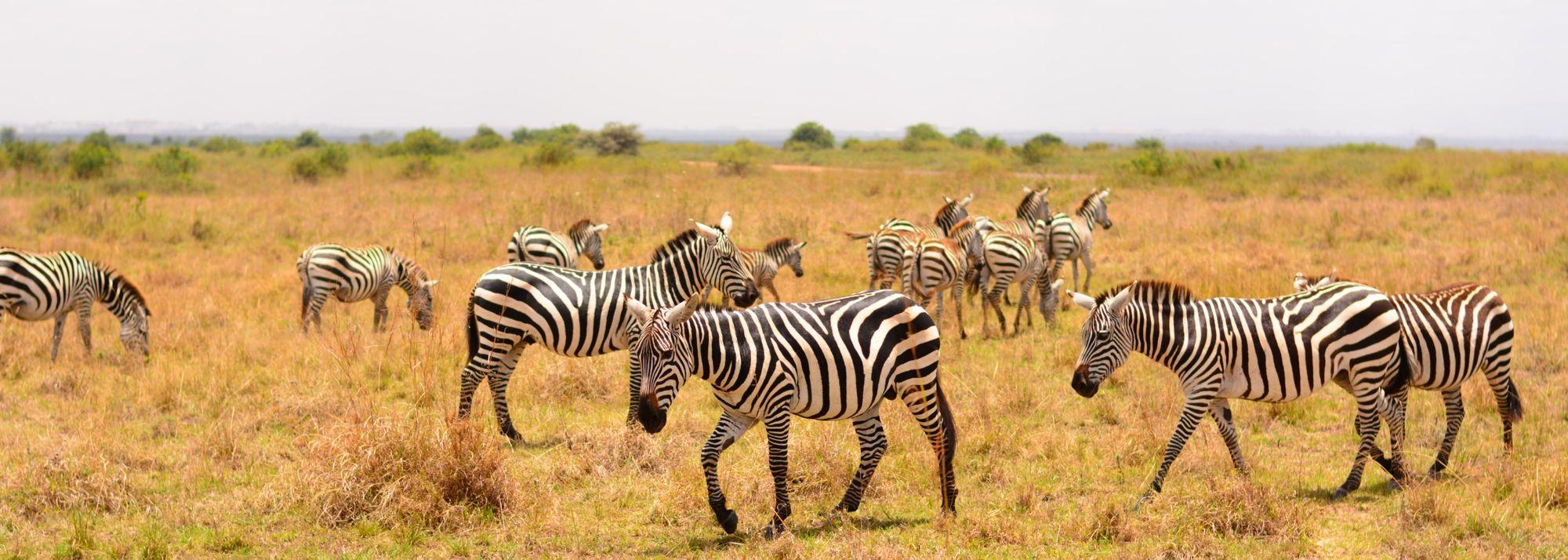 Visit Nairobi, capital of Kenya and location of the WU20 Championships 2021